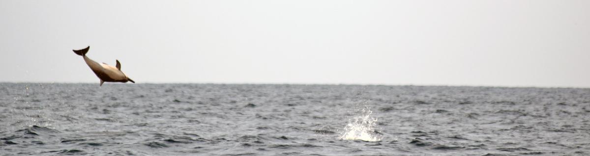 Dolphin watching in Kalpitya